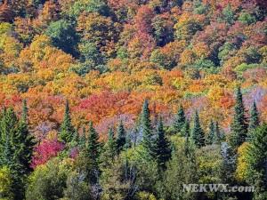 2014 Vermont fall foliage