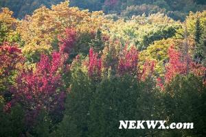 fall_2014-3
