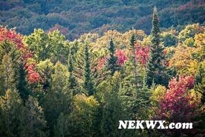 fall_2014-4