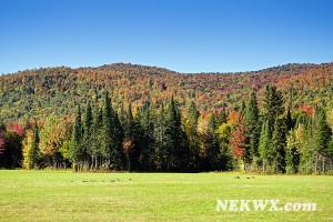 nek vt fall foliage 2014